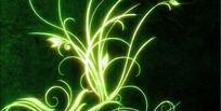高清花纹生长动态视频素材VJ