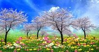 美丽的樱花花海视频