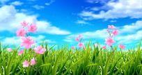 粉色桃花视频