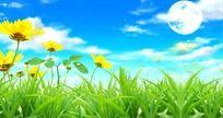 野花风景视频
