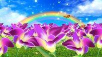 手绘花朵 美丽花丛视频素材