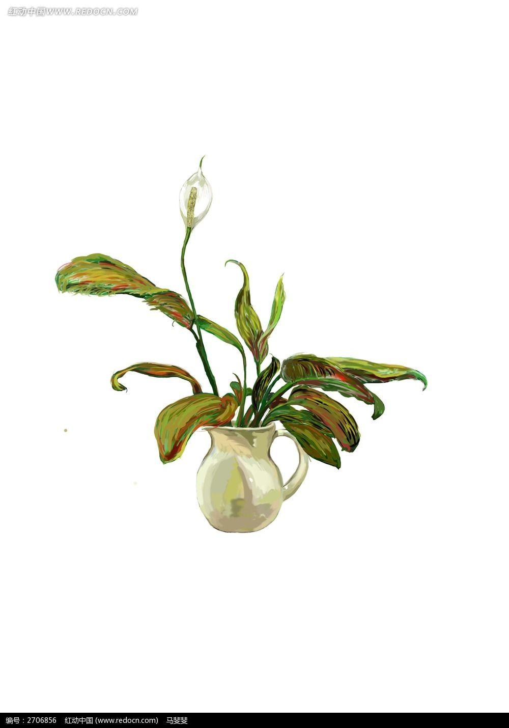 植物插画 白掌 手绘 水彩