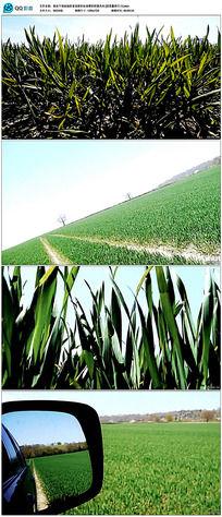 农家欢田园风光视频素材
