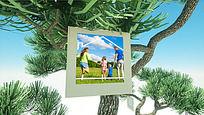 婚礼/家庭儿童成长相册通用展示AE模板