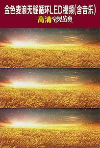 金色麦浪无缝循环LED视频(含音乐)