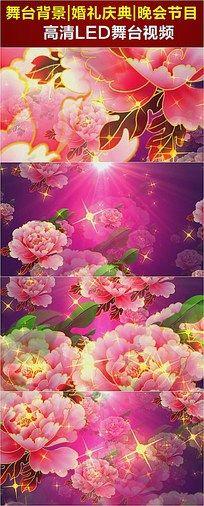 桃色牡丹花盛开LED视频
