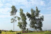 蓝天白云下洛阳桥的树木摆动及周围动态视频素材