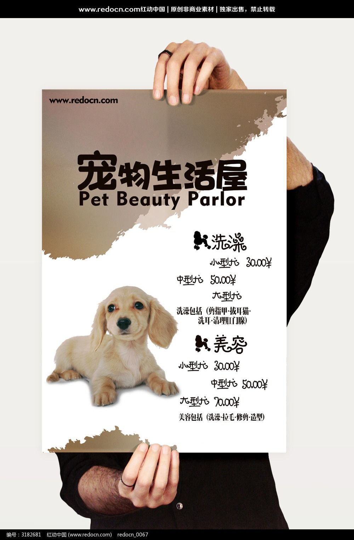 宠物宣传海报