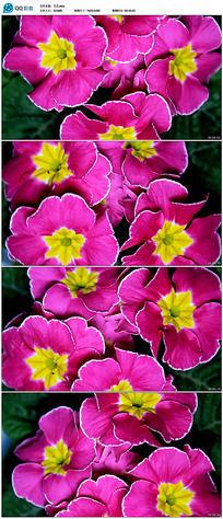 实拍素材花卉视频_实拍花卉视频下载婚庆视频剪辑图片