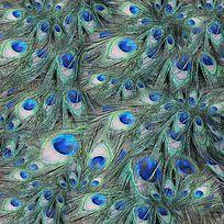 7款 孔雀羽毛肌理印花图案TIF设计素材下载