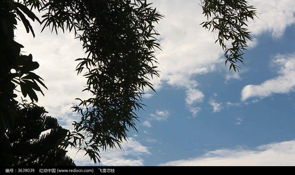 蓝天白云下的树叶视频