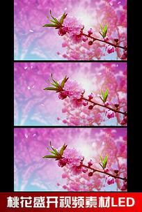 桃花盛开视频素材LED