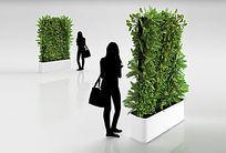 3d盆栽植物模型下载+贴图
