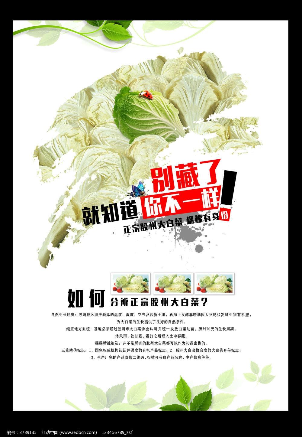 蔬菜海报设计_海报设计/宣传单/广告牌图片素材