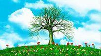 唯美大树生长背景视频