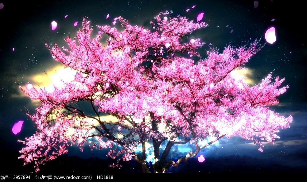 唯美流光樱花树背景视频图片