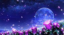 唯美月色大海花瓣飘落视频背景