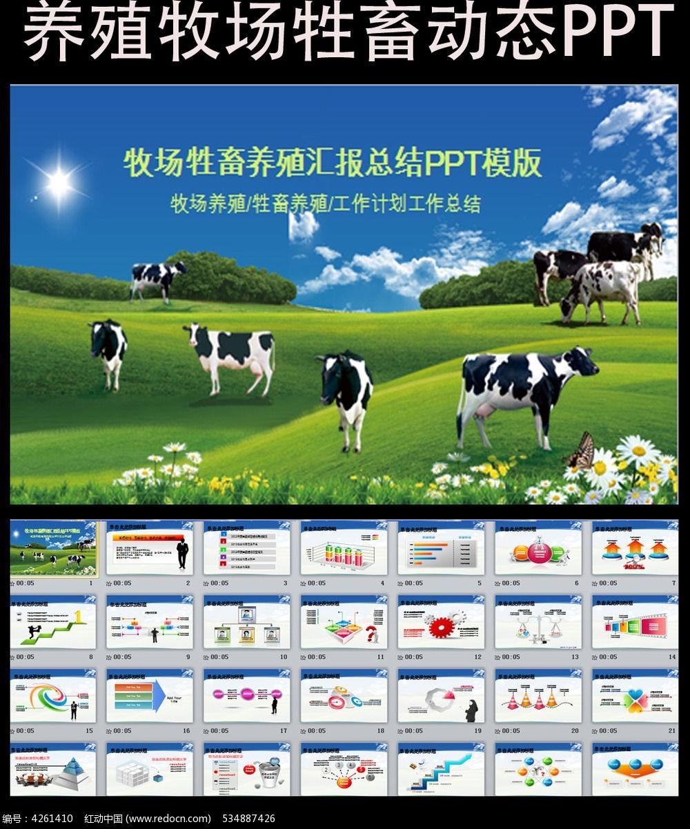 生态牧场奶牛养殖PPT模板图片