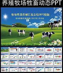 生态牧场奶牛养殖PPT模板