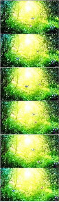 蝴蝶飞入森林舞台背景视频素材