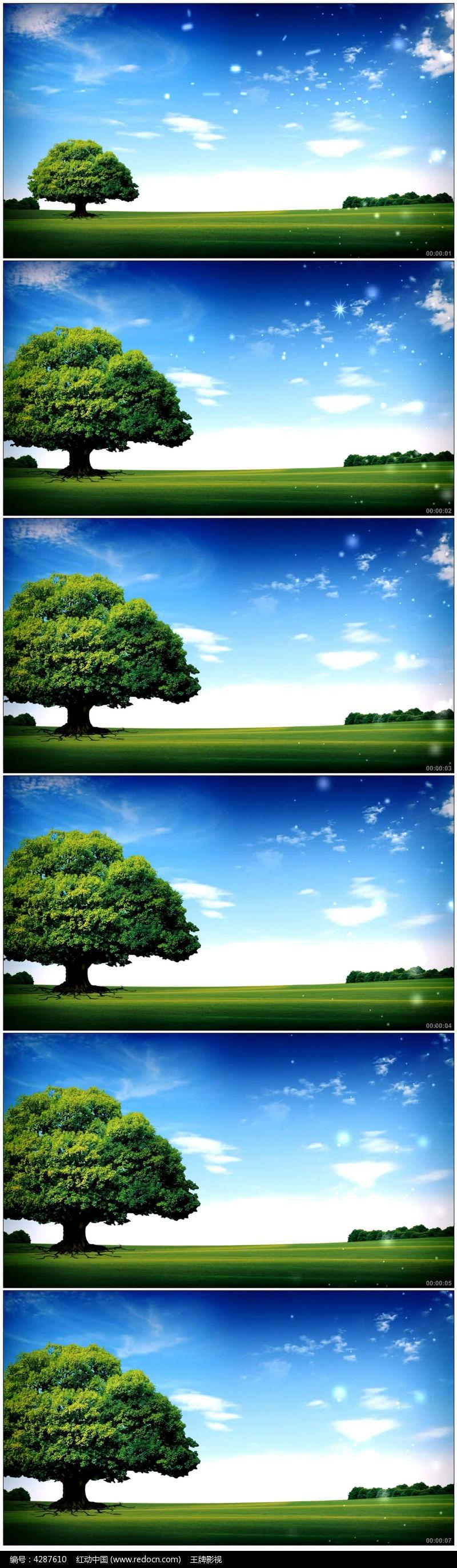 树木生长动画
