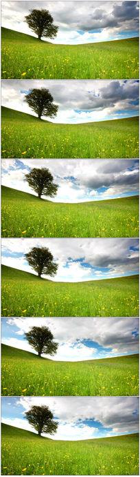 草地天空白云视频