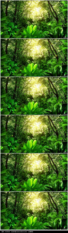 绿色森林视频素材图片
