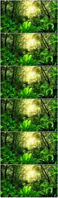 绿色森林视频素材 mov
