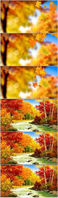 金秋金黄树叶实拍视频素材