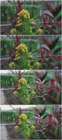 美丽的菜园鲜花种植视频
