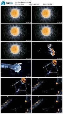显微镜放大后的微小生物视频