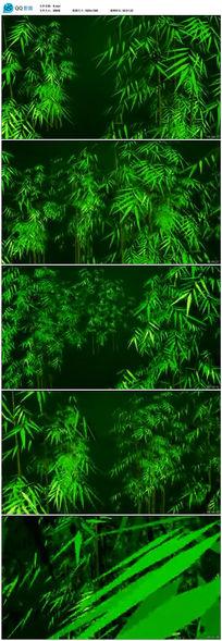 高清竹林飞舞视频素材