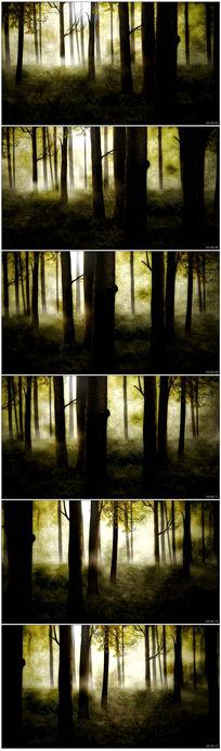 森林背景视频素材