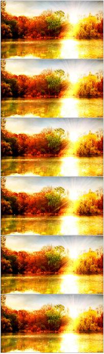 唯美秋天湖畔的风景视频背景