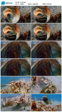 怪头鱼实拍素材