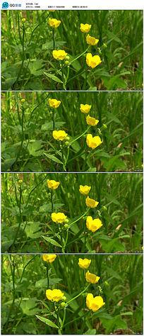 黄色小花高清视频素材