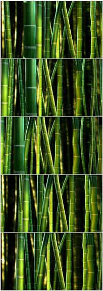 清新唯美竹林LED循环背景视频