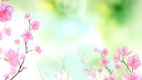 盛开的朵朵桃花唯美仙境视频素材