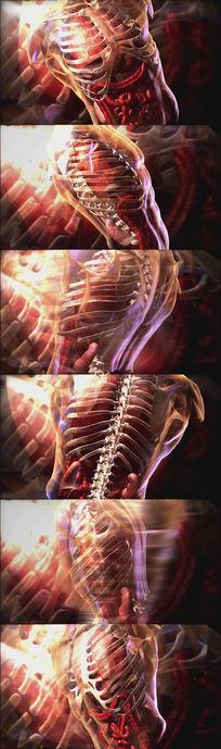 医学类-人体内骨骼、心脏器官等视频素材