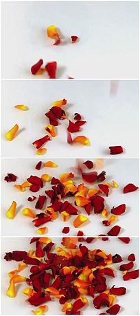 花瓣洒落视频背景