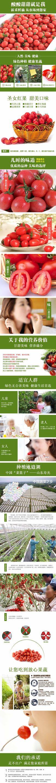 淘宝圣女果西红柿果蔬描述页设计