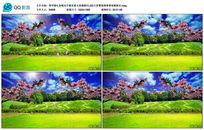 草坪春暖花开桃花LED视频背景