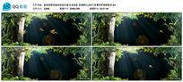 超高清唯美森林绿3D幻影全息投影led背景视频素材