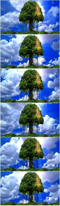 大自然蓝天大树视频