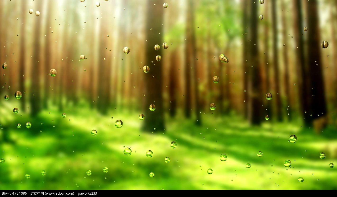 清新森林视频素材图片