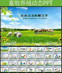 养殖业畜牧业乳业奶牛PPT模板
