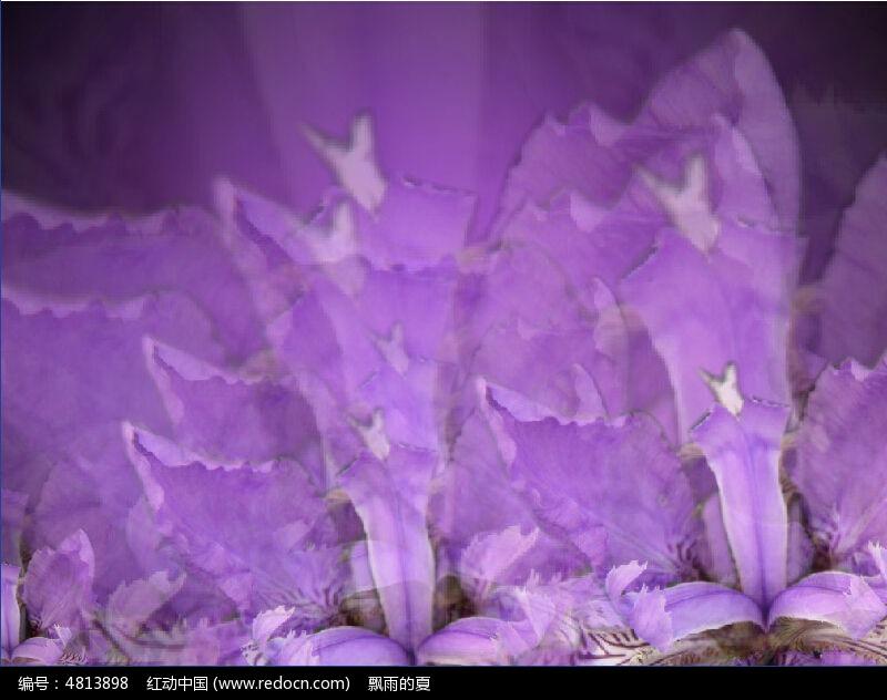 紫色的花特效视频模板