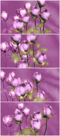 紫色玫瑰视频素材