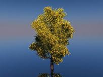 桂花树C4D模型