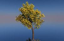 黄花树C4D模型